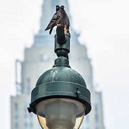 bird lamp lampost architecture street photography travel UGC content